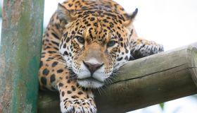 Paradise Wildlife Animals in Hertfordshire